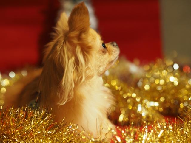 犬 クリスマス ケーキ おすすめ 人気