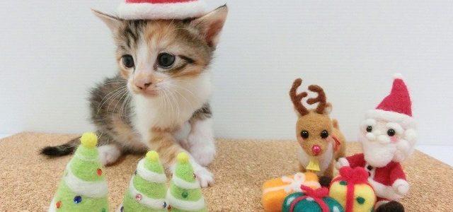 タカラトミーモールに会員登録するとクーポンもらえる!クリスマスや誕生日プレゼントにも♡