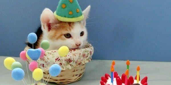 ワンワンとうーたんのぬいぐるみ電報があった!誕生日や祝い事におすすめ【いないいないばあっ!】