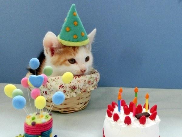 バースデー 電報 誕生日 ぬいぐるみ わんわん